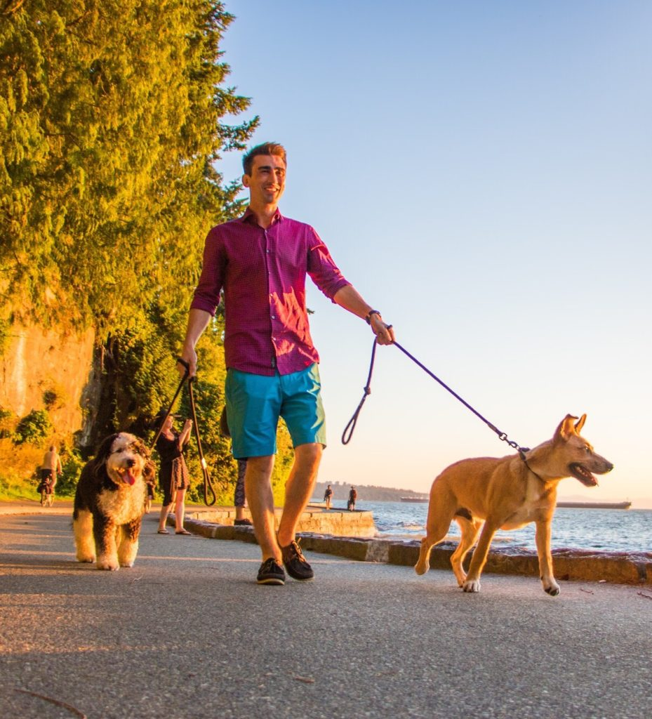 dogs, seawall, vancouver, dog friendly park