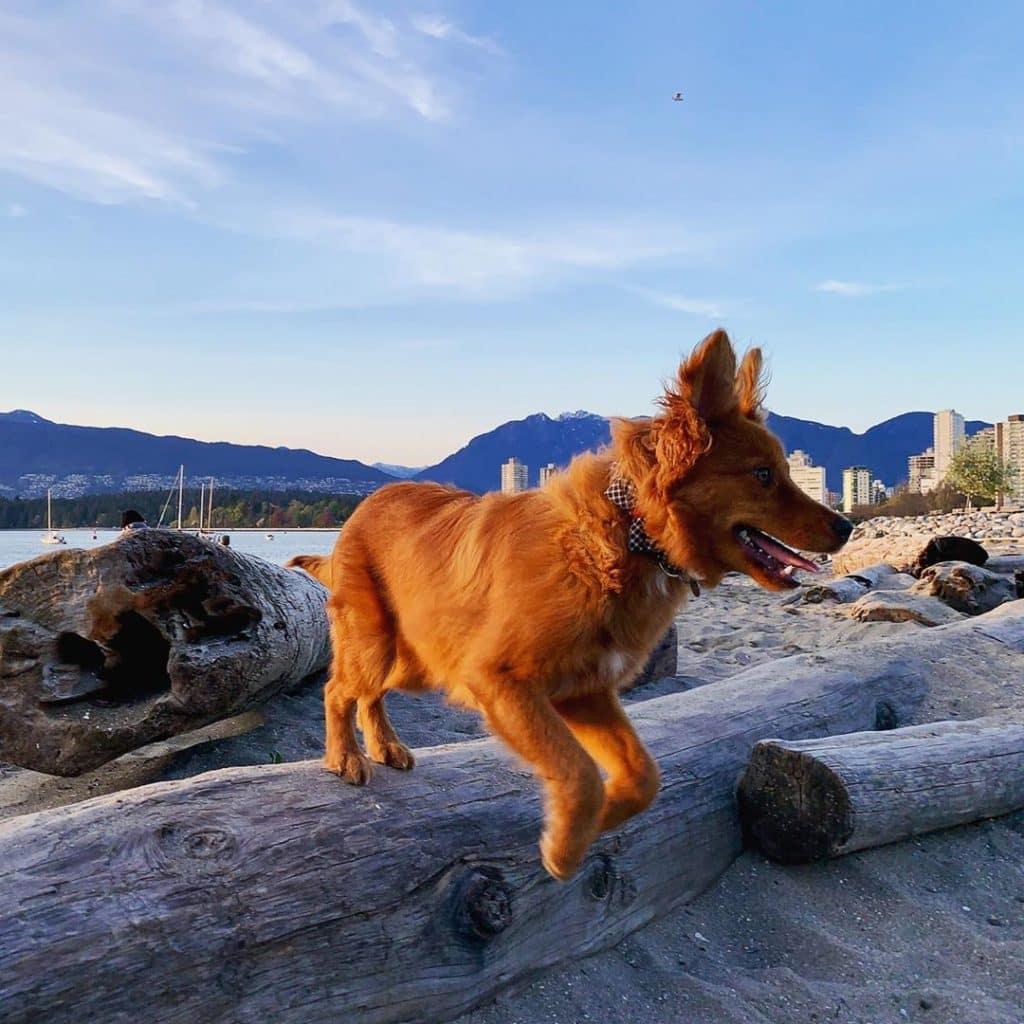 dog, kitsilano, vancouver